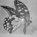 Tekening van een vlinder