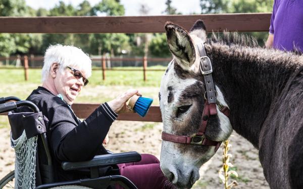 Vrouw in rolstoel verzorgt een ezeltje