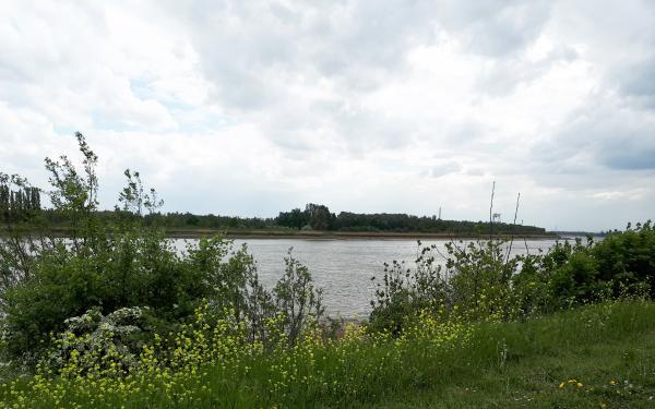 Schelde landschap