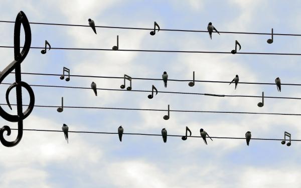 Notenbalk in de lucht met vogels