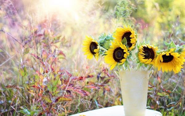 zonnebloemen in vaas op tafel