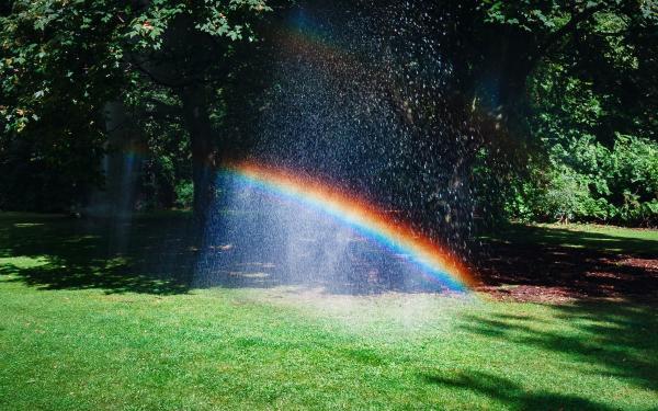 Regenboog in het midden van een park