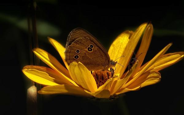 vlinder bloem