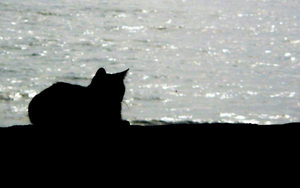 kat aan zee