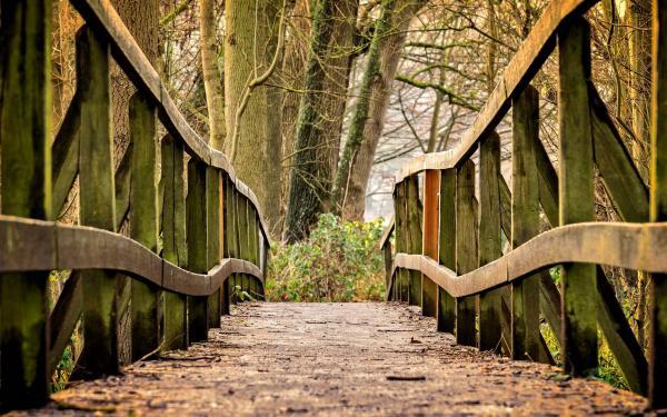 brugje in het bos