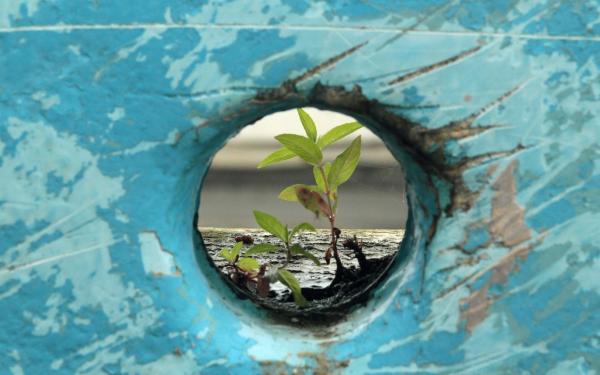 groen plantje te zien door kijkgaatje