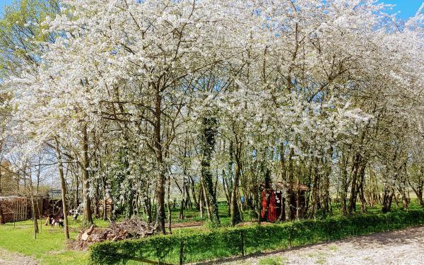 Bomen met bloesems