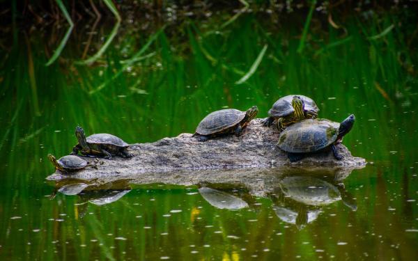 schidpadden op vlot